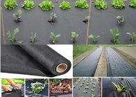 PP / PE Black Weed Control Membrane Keep The Water / Prevent Use Farm Chemical Available